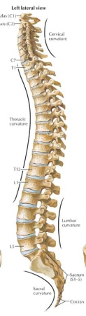 The-Spine