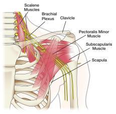 brachial-plexus-4-3